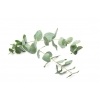 Eucalyptus Eliquid