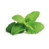 Peppermint Eliquid